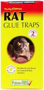 [12] STV PEST CONTROL - RAT GLUE TRAPS (D)